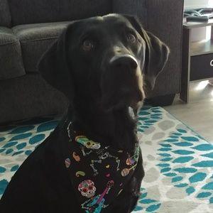 Slide on the collar dog bandana